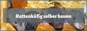 Rattenkäfig selber bauen