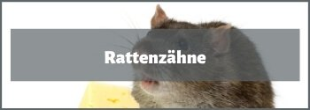 Rattenzähne