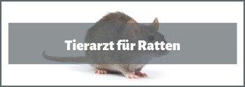 Tierarzt für Ratten