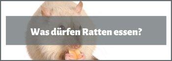 Was dürfen Ratten essen